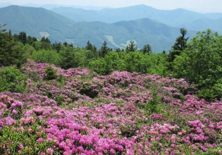 Appalachian Trail (USA)
