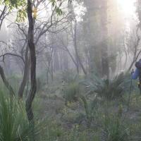 walker_in_mist