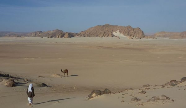 A Bedouin, Camel And Desert Plain, Near Jebel Mutamir Sinai Trail