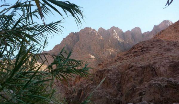 Bamboo Blowing Below The High Peaks Of Jebel Naja, Sinai Trail