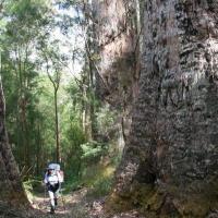 walking_past_tingle_trees_pelusey